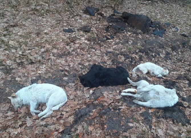В брянском лесу обнаружили трупы убитых собак