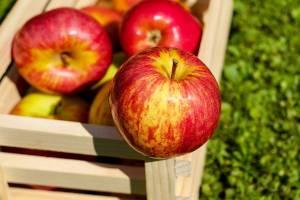 Брянские таможенники задержали 8 фур с фруктами