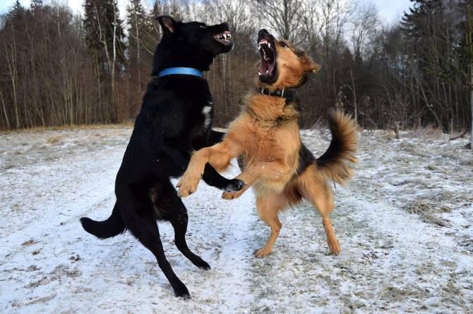 В Карачеве сообщили об отравлении бродячих собак