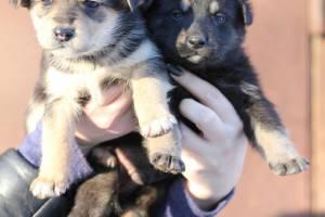 В Почепе ищут хозяев для 21 щенка