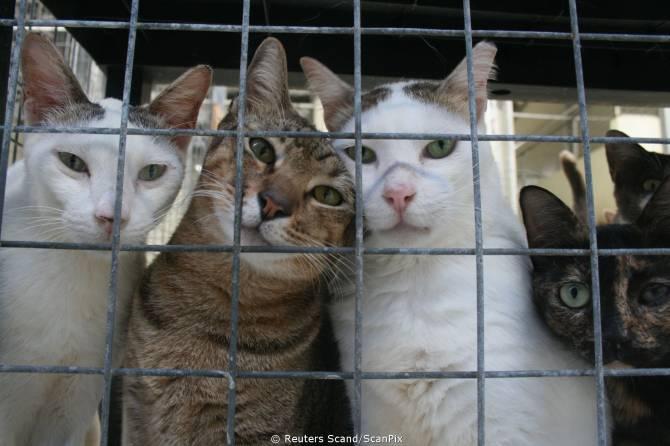 В Брянске рассказали, как будут исполнять новый закон о животных