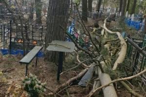 В Клинцах на кладбище рухнувшее дерево повредило несколько могил