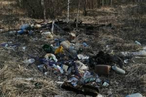 Лес в брянском поселке Суземка превратили в свалку