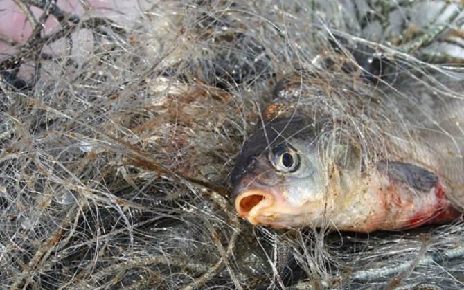 В Брянской области осудят рыбаков-браконьеров