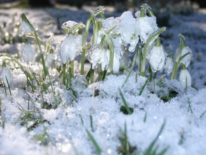 В Брянской области в первый день весны потеплеет до +4