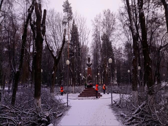 В Брянске варварски спилили деревья в сквере Камозина