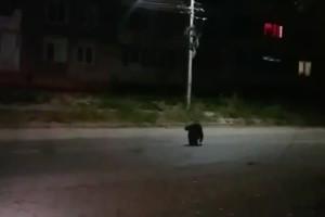 В Брянске сняли видео сидящей на проезжей части старушки