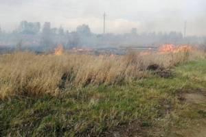 В Брянской области установился 3 класс пожарной опасности