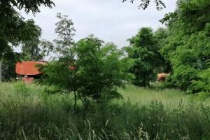 В Новозыбкове жителей напугали водовозы у местного озера