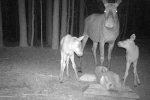 Детенышей «Брянского леса» сняли на фото