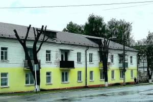 Лысые деревья в Новозыбкове напомнили людям фильмы ужасов