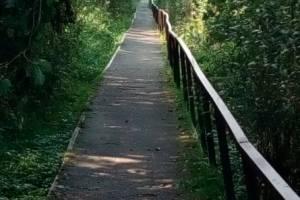 В Климово детям приходится ходить в школу по разрушающемуся мосту