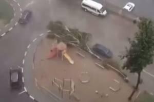 В Брянске сняли на видео падение сознательного дерева