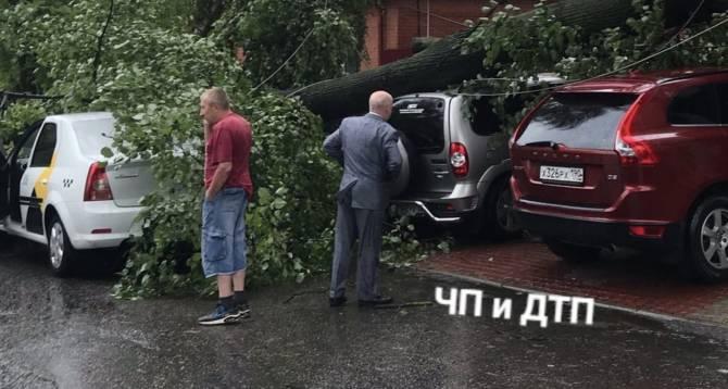 В Брянске упавшее дерево придавило несколько автомобилей