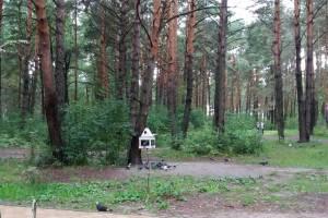 Брянцы просят спасти от вырубки лес в Сосновом бору