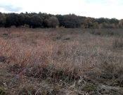 В Почепском районе 278 гектаров сельхозземли заросло травой