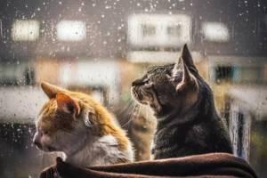 Брянцам в среду снова обещают дождь