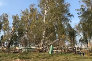 В брянском поселке Локоть на кладбище рухнуло дерево