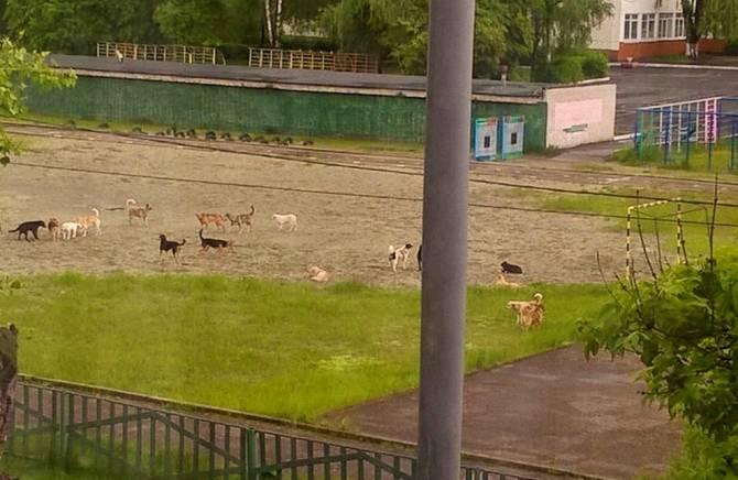 В Брянске свора бездомных псов атаковала территорию школы № 58