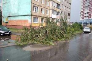 В Брянске на переулке Пилотов рухнуло дерево