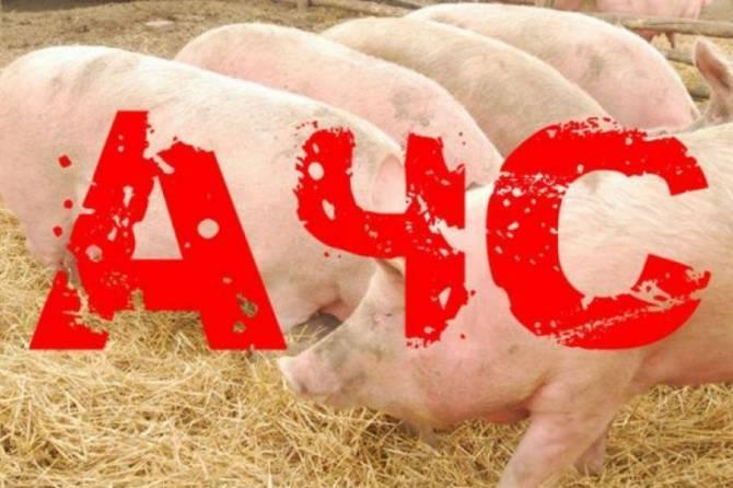 На Брянщине обнаружили очаг африканской чумы свиней