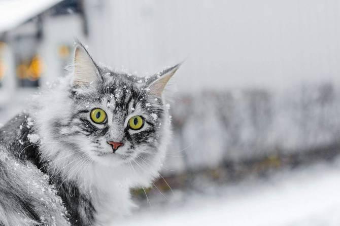 Брянцам обещают мягкую, но снежную зиму