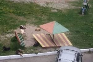 В Брянске стая бродячих собак устроила лежбище на детской площадке
