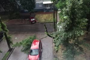 В Брянске автомобиль оказался на пути падающего дерева