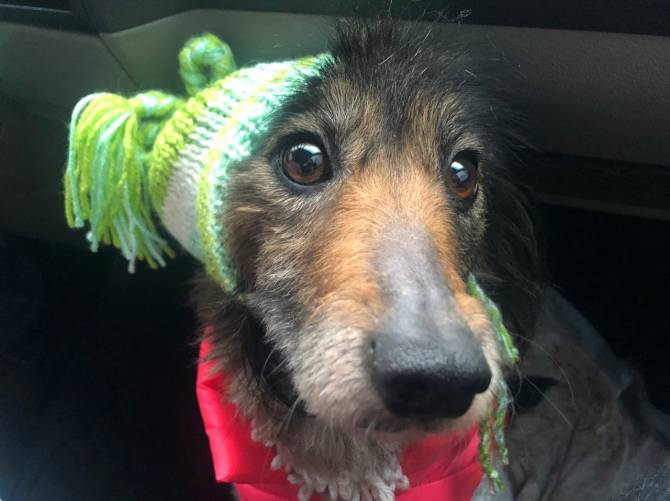 В Брянске ищут любящих хозяев для собаки без задних лап