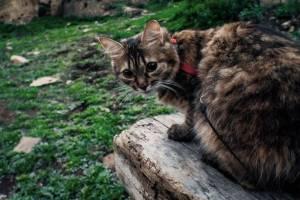 Брянская кошка-путешественница Бусинка покорила социальные сети