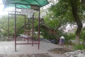 Брянцев возмутила остановка-теплица на улице Камозина