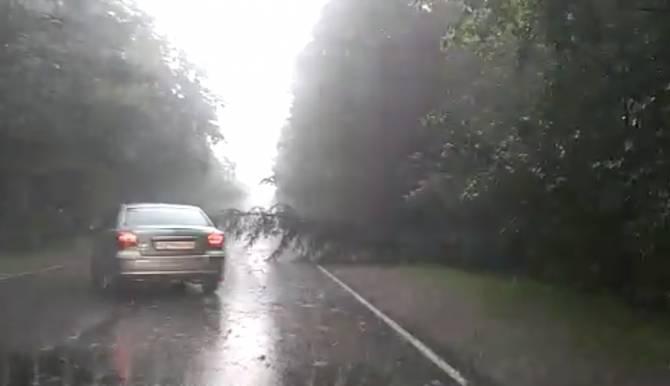В Брянске шквалистый ветер повалил несколько деревьев