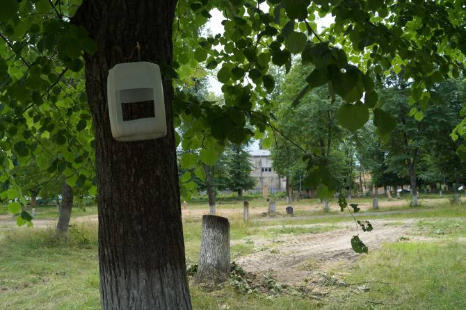 Чиновники отчитались о спиле 38 аварийных деревьев парке Клинцов