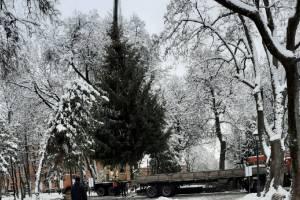 В Брянске установили главную новогоднюю елку города