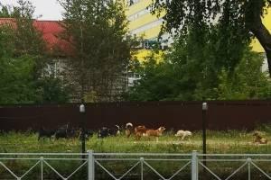 В Брянске огромная стая бродячих собак оккупировала автовокзал
