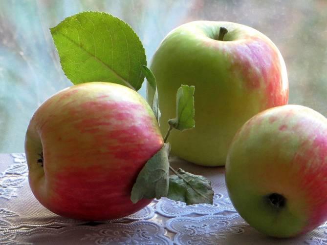 На Брянщине заложат 200 гектаров плодовых садов