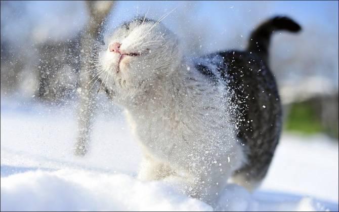 В четверг на Брянскую область обрушатся снегопады