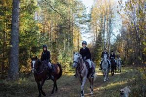 Под Брянском пройдет турнир по конному туризму «Партизанская тропа»