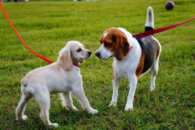 В Суземке создадут парк для выгула собак