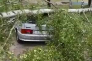 В Карачеве рухнувшее дерево раздавило автомобиль