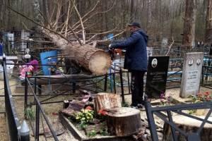 На брянском кладбище убрали рухнувшее на могилу дерево