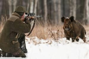 Брянский пенсионер устроил в заповеднике охоту на диких кабанов