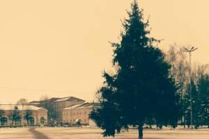 В Трубчевске установили новогоднюю ель