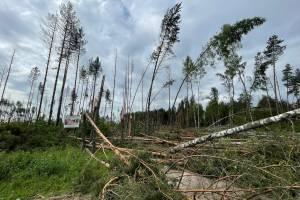 В Брянской области пронёсся смерч и срезал деревья