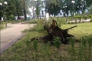 В брянском сквере Морозова с корнем вырвало дерево