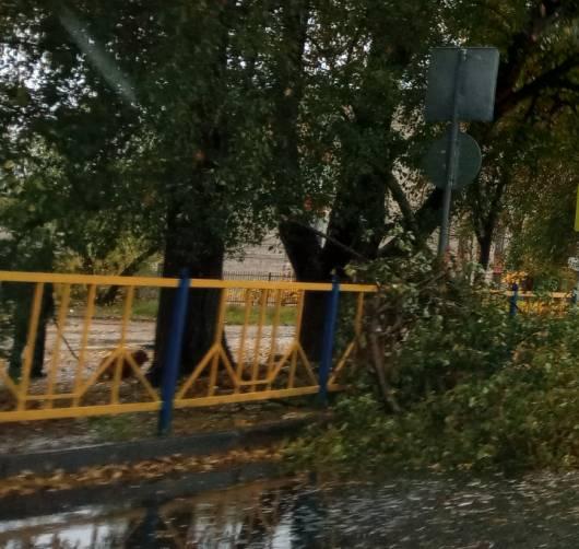В Брянске на улице Почтовой упало дерево