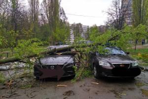 В Брянске ураган повалил дерево на две дорогие иномарки