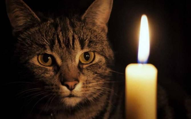 В Новозыбкове целую неделю возможны отключения света
