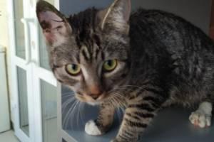 В Брянске на Новостройке из окна многоэтажки выкинули кота