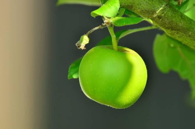 На Брянщине заложили уникальный яблоневый сад